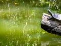 Schildköte / tortoise