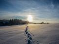 Spuren im Schnee / tracks in the snow